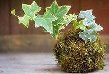 Dream Terraniums ,Kokedamas , Succulents & Air Plants
