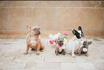 Fur Babies / Bride's and Grooms BEST friends! Wedding inspiration that includes your pets.