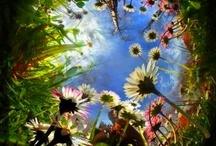 Flowers / Beauty of flowers.