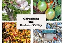 Gardening the Hudson Valley / The gardens, gardeners, plants and inspiration of New York's Hudson Valley - where American Garden Design began. / by Gardening the Hudson Valley
