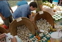 Hudson Valley Festivals / by Gardening the Hudson Valley