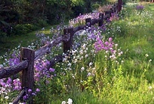 ✿⊱In A Field of Flowers ♥