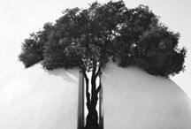trees / by Daniela Wendy