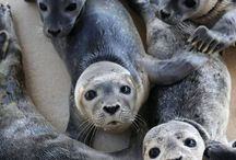 Animals / Mostly seals, but who cares