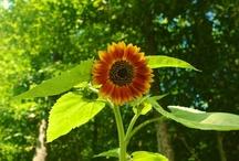 How Does My Garden Grow / by Nancy Ashworth
