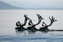 Deer, moose and antelope / by Kim