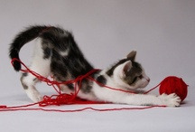 """Krazy kitties / """"Cats are connoisseurs of comfort."""" James Herriot  / by Kim"""