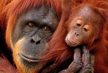Primates / by Kim