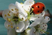 All God's Creatures ... Ladybugs and Other Insects / by Jean Heavrin