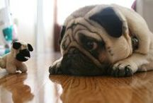 All God's Creatures ... Pugs and Puglets / by Jean Heavrin