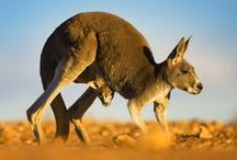 All God's Creatures ... From Downunder / by Jean Heavrin