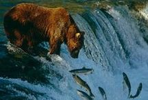 All God's Creatures ... Bears / by Jean Heavrin