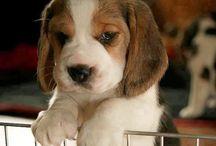Cute Pets & Accessories