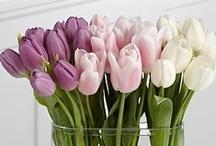 Flower Arrangements and Centerpieces!! / by Ginna Germain Basile          (Mesuki58)