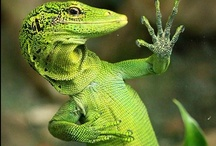 Leaping Lizards, Frogs and Snakes / by Lorraine Packer
