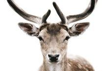 Oh Deer / by Sarah Doyle