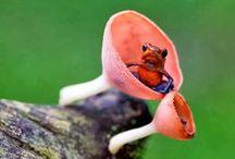 Fungus Amongus / by Sarah Doyle