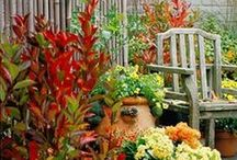 Gardening and Outdoor areas / by Benita Hunt