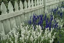 Lila-white-blue flowers