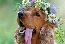 Animals at Weddings :)