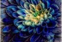 Blue! / by Natalie Folk