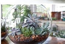 Crafty Ideas / by Pamela Ann