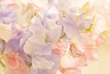 Pastel / by Natalie Folk