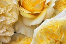 Yellow / by Natalie Folk