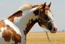 horses are beautiful! / by Gail Groth