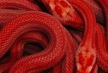 """ED AW/15'16 / Vav harfi ile çıkılan bu mistik yolculuk Erkan Demiroğlu Koleksiyonu'nda yalın formlarla detaylı kupların yarıştığı, maceralı bir oyuna dönüşüyor. Siyah, gri, pudra ve parlak kor kırmızısının hakim olduğu koleksiyonda, yünlü balıksırtı ve saf ipek krep gibi doğal kumaşlar yüksek teknoloji ürünü endüstriyel materyallerle kontrast oluştururken, """"vav"""" harfinden stilize desenler, el işi nakış detayları yeniden yorumlanarak, volumlü, modern silüetlerde hayat buluyor."""