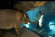Animals = Joy / by Paige Christensen