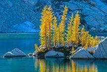 Autumn / by C. Christal Atagana