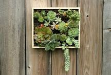 Puttering In The Garden / Gardening and outdoor living spaces - ideas, tips, and inspiration.