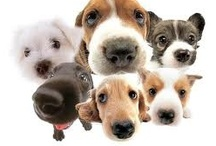 Pups / Dogs puppies just about anything Cute / by Didymus International inc.