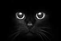 I <3 Animals!!! / by Leila-Fred Gruber