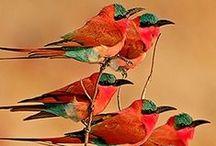 Birds / by Kalin Schmitz