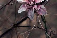 Art of plant / by Marina Winkel