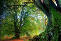 Trees | They are amazing!