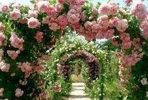 heavenly gardens / by Jamie Lehman