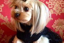 Too Funny or Too Cute! / by Dee Dee Blocker