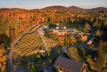 Pretty Sweet Georgia Wineries / Relax & enjoy a glass (or two) at these fabulous Georgia wineries. / by Explore Georgia