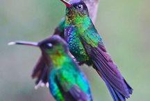Humming birds / by Bonnie Biggs