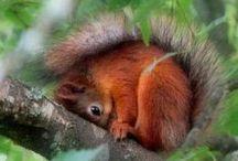 Squirrels / by Justine Burton