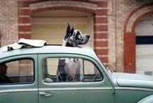 VW's Best Friend  / Man's best friend is also Volkswagen's best friend. Submit your pet's photos & #VWStories at whyvw.com.