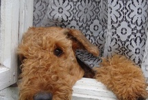 airedale love / by Eden Jamison