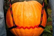 Fall at Kinsman Garden