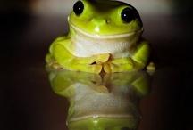 """quoooack   frogs /  """"Küss mich mich - ich bin ein verzauberter Frosch!""""  (oder auch nicht...) / by Karin Schuhmacher"""