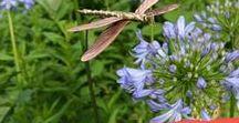 Garden Art / From whimsical to elegant Kinsman Garden's Garden Art