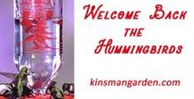 Welcome Back the Hummingbirds