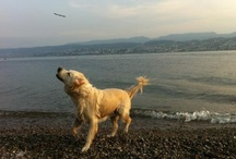 globetrotting pets / Meet the furry faces of our clients' pets who we help move all over the world!